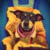 Internet Miniature Pinscher Service, Inc. (IMPS) - Florida