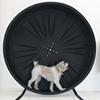 Pet Wheel Company