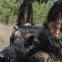 German Shepherd Rescue of Central Colorado