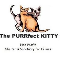 The PURRfect KITTY Shelter-Sanctuary
