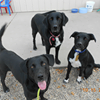 Humane Society of Richland/Wilkin Counties