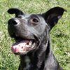 Full House Full Hearts Dog Rescue