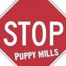 Citizens Against Puppies Direct Mckinney, TX