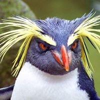 The Penguin Marketing Group LLC