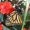 Butterfly House at Churchville Nature Center