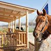 Countryside Kennel Resort and Vizsla Breeder