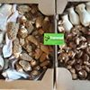 Trammell Treasures Mushroom Farm