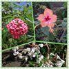 The Garden Center - Belize