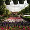 Sugar Grove Greenhouse and Garden