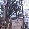 Hollow Oak Farm