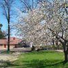 Diehl's Orchard & Cider Mill