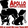 Apollo Support & Rescue for Abandoned Dogs