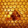 Spikenard Honeybee Sanctuary