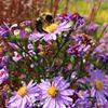 MSU Horticulture Gardens- Programs