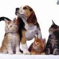 Veterinary Clinic - El Cachorro