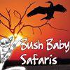 BushBaby Safaris
