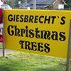 Giesbrecht's Tree Farm