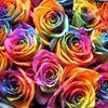 Fancies Flowers & Gifts