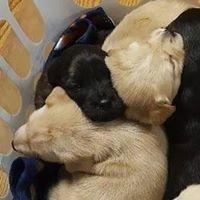 Kelley's Heart to Heart Pet Adoption Center