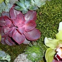 Koehler &  Dramm of Missouri Wholesale Florist