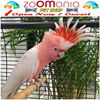 Zoomania Mauritius  -  The Dogs, Cats & Birds's Specialist