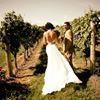 Annata Vineyards