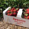 Boonstra Farms