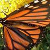 Andrea's Papillon A Handbag Boutique