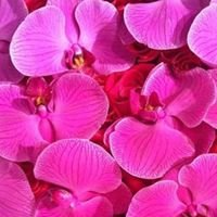 Get Fresh Flowers - Vancouver's Elite Floral Designers