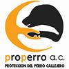 Protección del Perro Callejero A. C.
