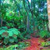 East Gippsland Rainforest Conservation Management Network
