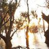 Murray River Council