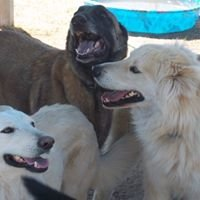 Howl -A- Day Inn Dog Boarding and Training