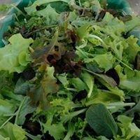Squeaky Green Organics