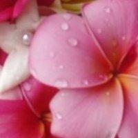 Island Orchard Florist