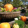 The Amarillo Botanical Gardens