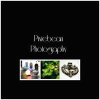 Pixiebean Photography