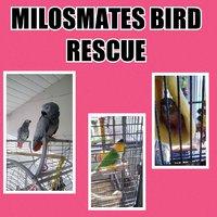 MilosMates Bird Rescue