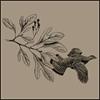 Sassafras Audubon Society