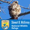 Stewart B. McKinney National Wildlife Refuge