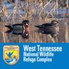 West Tennessee National Wildlife Refuge Complex