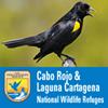 Cabo Rojo and Laguna Cartagena National Wildlife Refuges