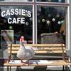 Cassie's Cafe soon Chappie's