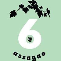 6 Assagao