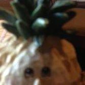 Pineapple Jack's