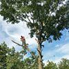 Cartwright Tree Service