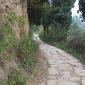 Endless Path Zendo