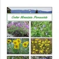 Cedar Mountain Perennials