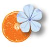 Bleu Tangerine Salon & Day Spa