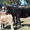Arizona Horseriding Adventures